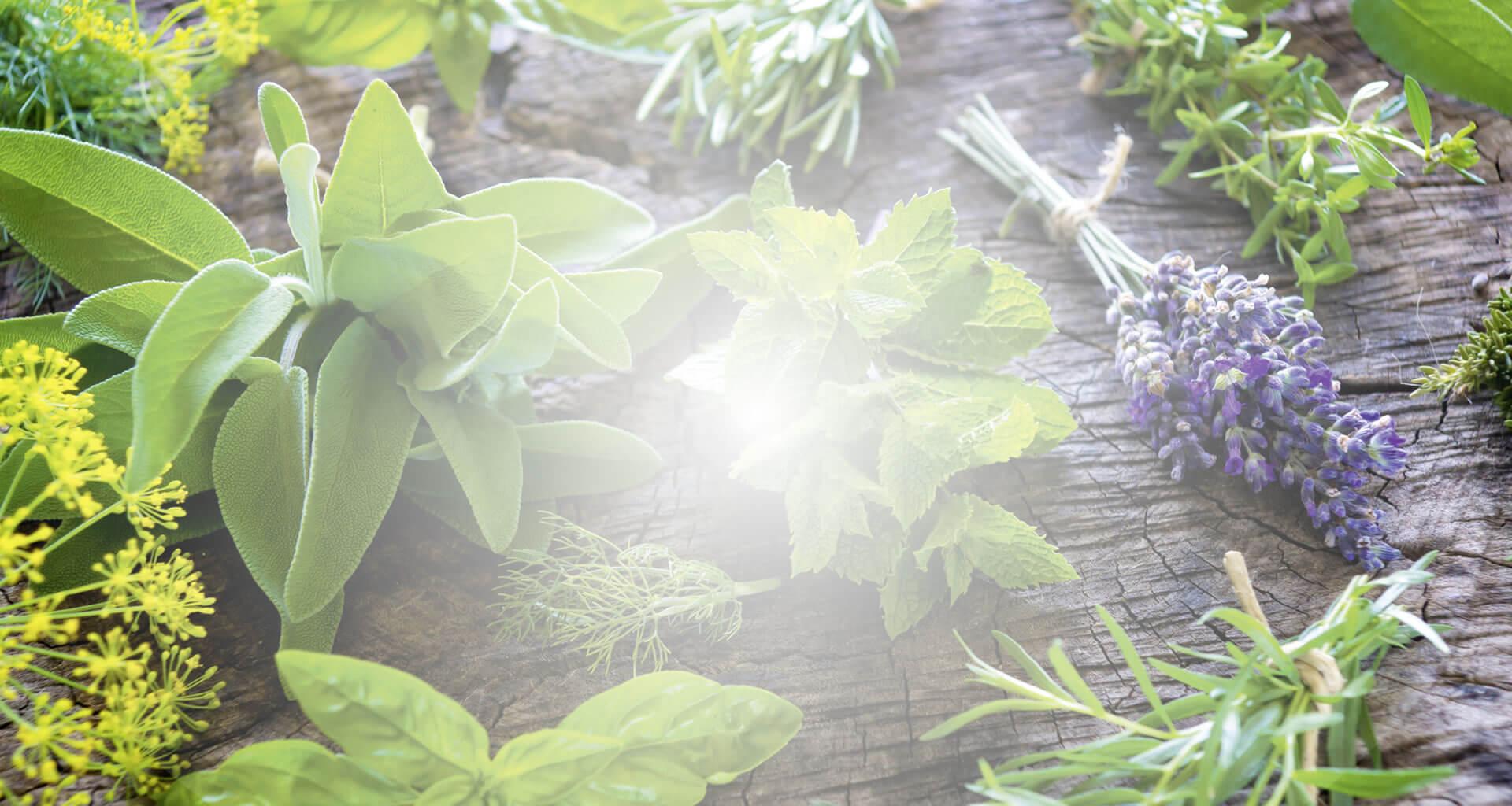 O Poder das Folhas