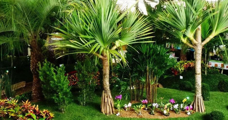 10 plantas que vão purificar o seu ar e o seu lar!