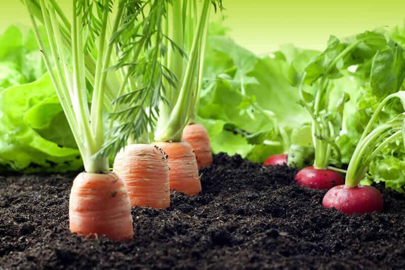 O Poder das Folhas | Arole Cultural: Odus de Nascimento e Jogo de Búzios | Acesse o site, conheça 10 alimentos que você pode replantar na sua casa e comece agora mesmo a sua Horta Mágica!